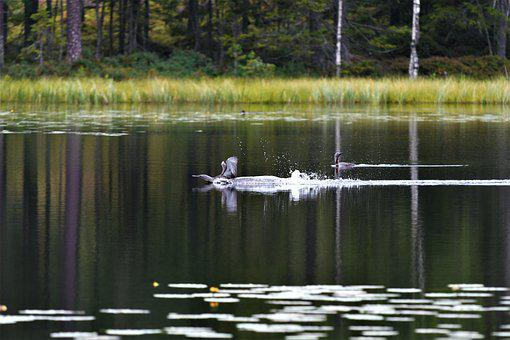 Body Of Water, Lake, Nature, No Person, Wood, Beautiful