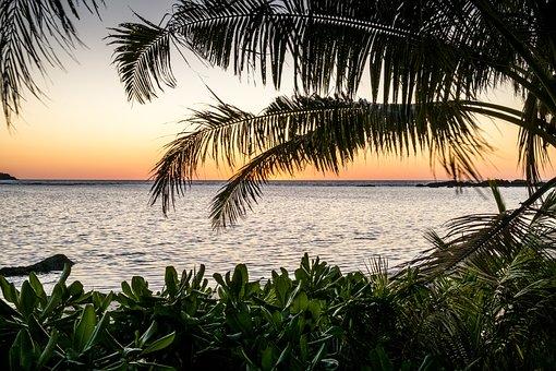 Beach, Palm, Tropical, Seashore, Ocean, Fiji, Island