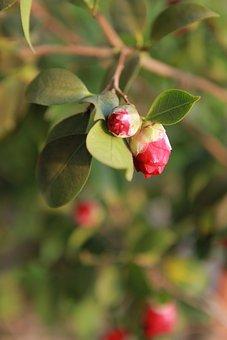 Nature, Flowers, Leaf, Plants, Garden, Wood, Petal
