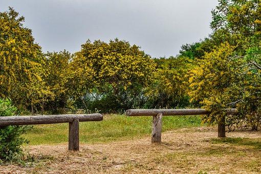 Tree, Mimoza, Landscape, Grove, Spring, Season