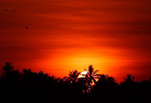 Sunset, Dawn, Dusk, Evening, Silhouette, Sun, Nature