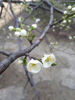 Nature, Tree, Flower, Spring, Plant, Fruit, Garden