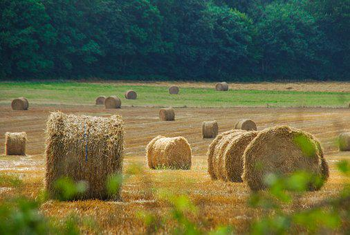 Hay, Rural Area, Straw, Farm, Landscape, Field, Nature