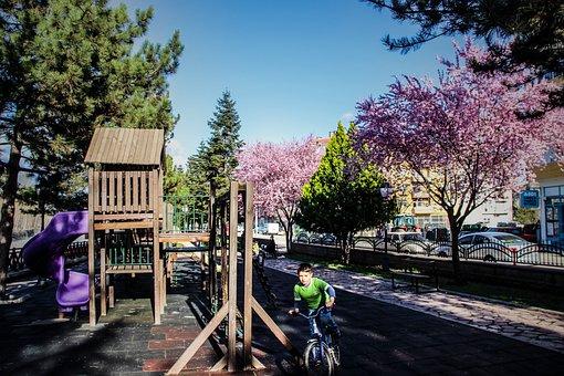 Tree, Outdoor, Nature, Wood-fibre Boards, Park, Street