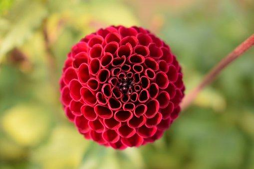 Nature, Dahlia, Summer, Flower, Red, Orange, Green
