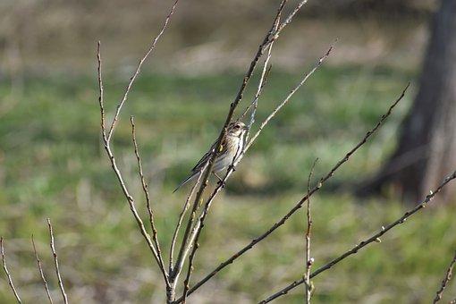 Animal, Grass, Wood, Bird, Wild Birds