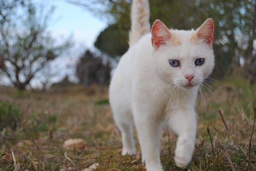 Animalia, Nice, Nature, Cat, Kitten, Wild Life