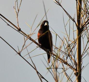 Bird, Wildlife, Songbird, Tree, Nature, Animal