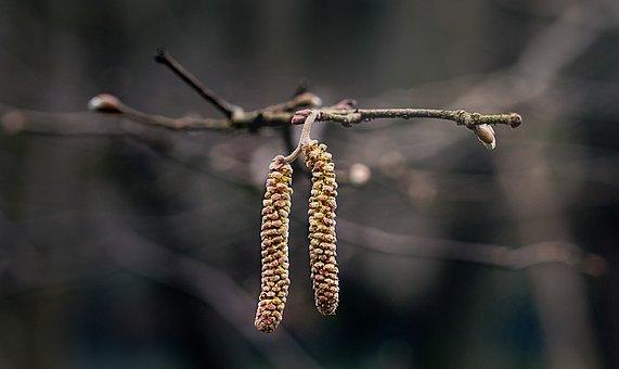 Nature, Tree, Wood, Winter, Alder, Alnus