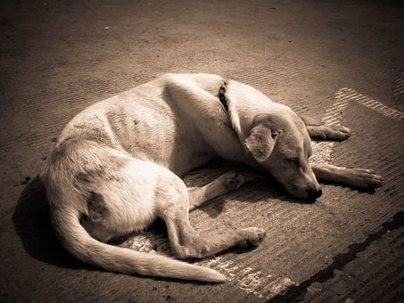 Dog, Sleeping, Animal, Canine, Pet, Skinny, Thin, Tired