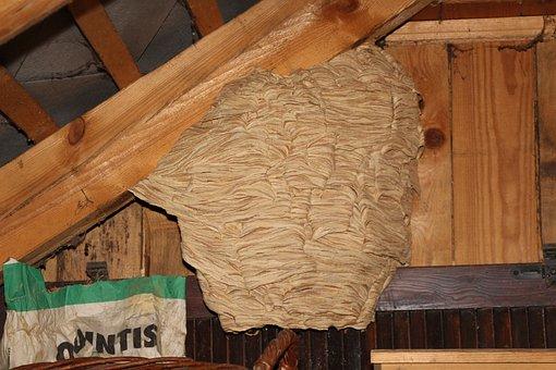 Hornets, Nest, Hornissennest, Attic, Insect, Animal