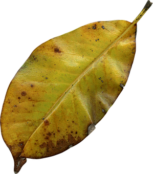 Leaf, Autumn, Nature, Fall, Autumn Leaves, Leaves