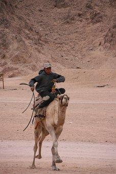Camel Riding, Egypt, Sinai, Desert, Camel, Bedouin