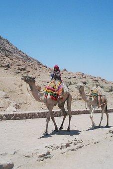 Bedouin, Boy, Dromedaries, Vacations, Travel