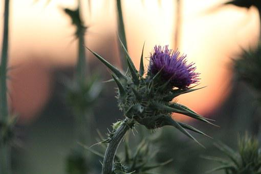 Flower, Magenta, Blooming, Plant, Nature, Summer, Green