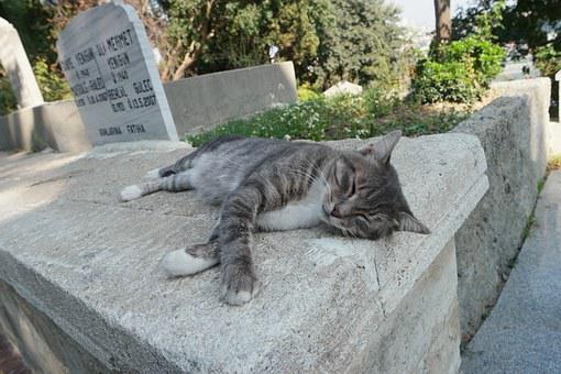 Cat, Drowsy, Proverbs, Stone, Siesta, Animal, Cute