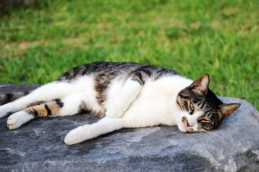 Cat, Cats, Park, Siesta, Cute, Love, Walk, Pm, Animal
