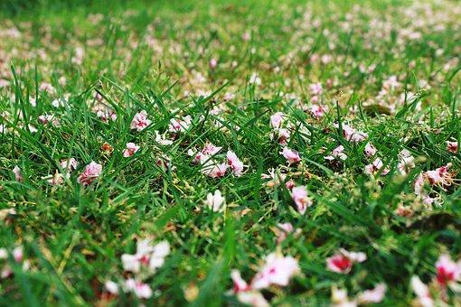 Grass, Meadow, Flowers, Chestnut Blossoms, Green