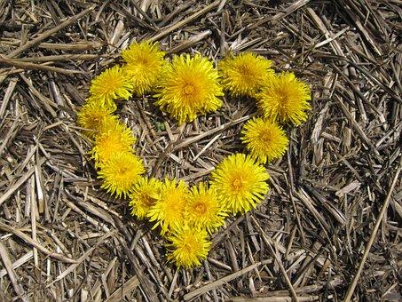 Heart, Yellow, Love, Flowers, Dandelion, Straw