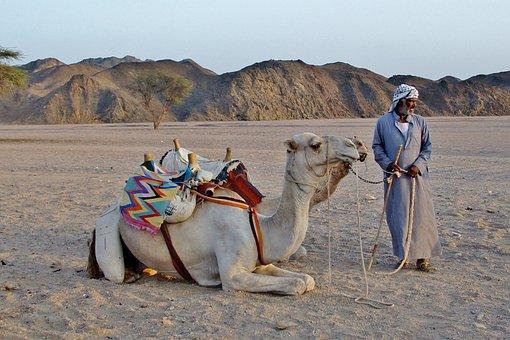 Camel, Bedouin, Desert, Sand, Egypt