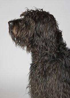 Dog, Portrait, Dog Portrait, Wildlife Photography