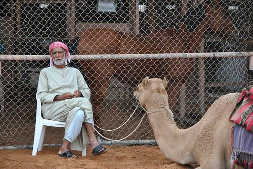 Camel, Dromedary, Bedouin, Desert, Emirates, Arabs