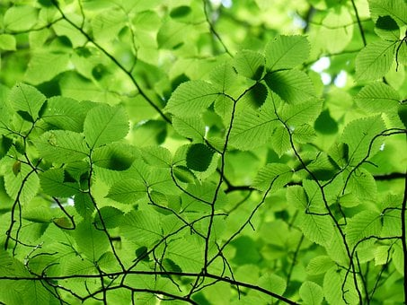 Leaves, Canopy, Green, Color, Shades Of Green