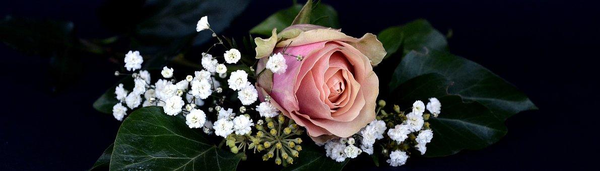 Rose, Blossom, Bloom, Flower, Rose Bloom, Gypsophila