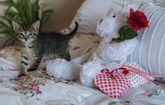 Kitten, Newborn, Cat, Foster, Cute, Fur, Domestic