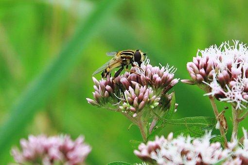 Mist Bee, Mud Bee, Translucent Bees