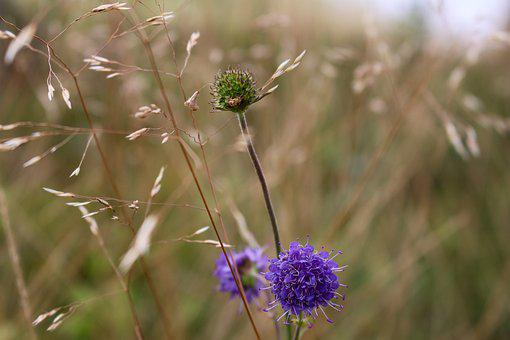 Flower, Purple, Green, Straw, Purple Flower, Nature