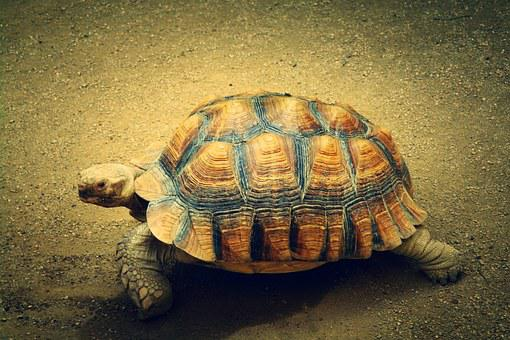 Turtle, Animal, Sea Turtle, Nature, Relaxed