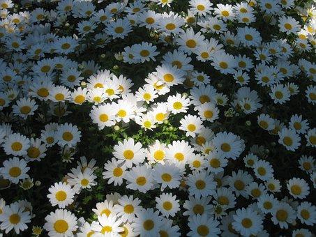 Daisy Margaret, Light, Shadow, Sun, One Side