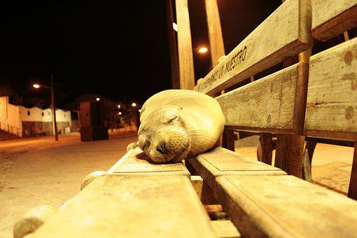 Sea Lion, Galapagos, Sleeping, My Place, Sweet, Relax