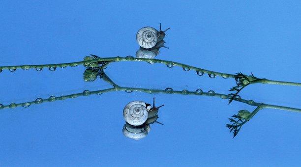 Snails, Shell, Reflection, Mirror, My Saturday