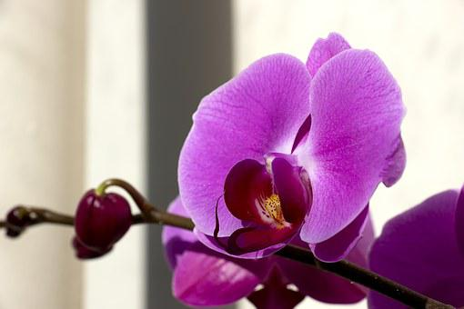 Veranda, Flowers, Plants, Spring, Nature, Wildflower