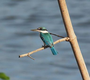 Bird, Wildlife, Nature, Animal, Wild, Outdoors, Avian