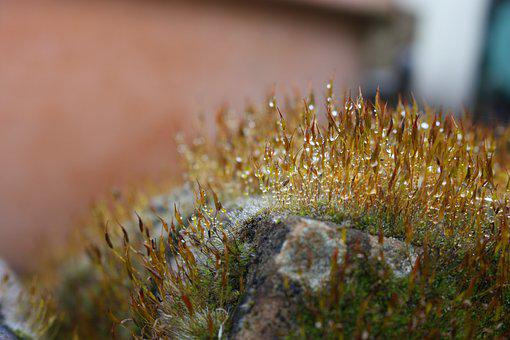 Nature, Plant, Close, Color, Moss, Wet, Drop Of Water
