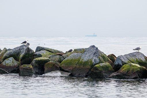 Rock, Sea, Dune, Helgoland, Beach, Gulls, Coast, Water