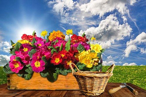 Flower, Primrose, Narcissus, Daffodil, Box, Nature