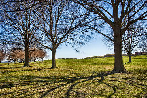 Tree, Landscape, Nature, Wood, Season, Fort Mchenry