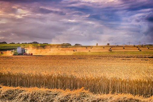Agriculture, Field, Landscape, Grain, Harvest, Wheat