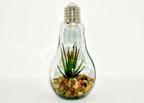 Light Bulb, Plant, Stones, Arrangement, Lamp