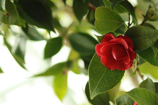 Noel Online Gift Shop, Nature, Flowers, Leaf, Plants