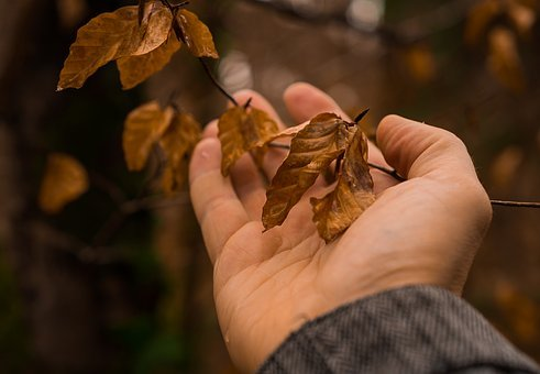 Nature, Hand, Leaf, Connected, Love, Recovery