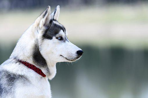 Dog, Canine, Cute, Mammal