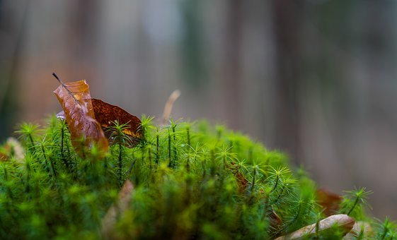 Nature, Leaf, Plant, Close, Forest, Moss, Up Close