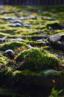 Nature, Plant, Color Moss, Moss Cushions, Green, Moss