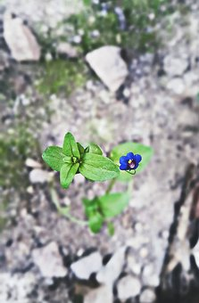 Nature, Flower, Flora, Leaf, Outdoors, Season, Summer
