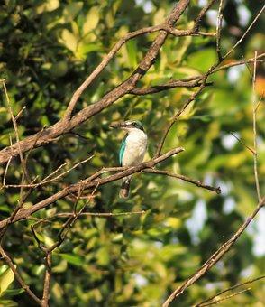 Bird, Wildlife, Tree, Nature, Outdoors, Animal, Wild